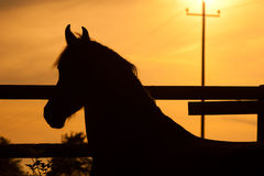 Horse in sunset. Out at feed Royalty Free Stock Images