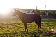 Horse in sunset Royalty Free Stock Photography