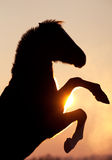 Horse in sunset. Horse silhouette in sunset in winter Stock Image
