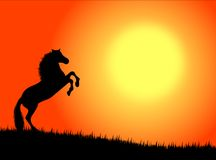 Horse in the sunset. Black wild horse against a colourful sunset stock illustration