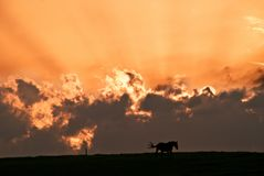 Horse in the sunset. A dramatic orange sky with clouds and the silhouette of a horse standing on land royalty free stock images