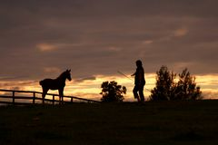With horse at sunset. Woman with horse at sunset Royalty Free Stock Image