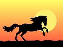 Horse and sunset. А horse bruises along on sunset Stock Photo