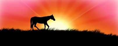 Horse in Sunset stock photo