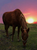 Horse and sunset. Image of a horse. landscape with a sunset stock photos