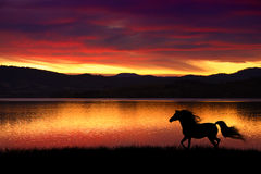 Horse and sunset. An Arabian horse trotting along the shore with a vibrant sunset over the bay in Tasmania, Australia