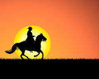 Horse on sunset background Stock Image