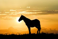 Horse on a sunset background Stock Photo