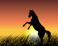 Horse on sunset background Stock Photos