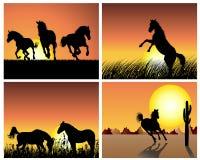 Horse on sunset background stock photo