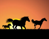 Horse on sunset background. Horse silhouette on sunset background. Vector illustration Royalty Free Stock Photography