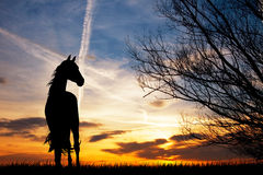 Horse at sunset Royalty Free Stock Photography