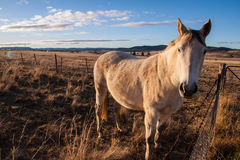 Horse with sunset light. Royalty Free Stock Image