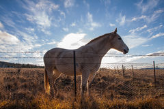 Horse with sunset light. Royalty Free Stock Photos