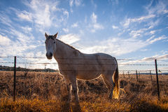 Horse with sunset light. Stock Photography