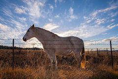 Horse with sunset light. Stock Images