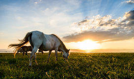 Horse on sunset Royalty Free Stock Photos