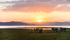 Horse on sunset Stock Photography
