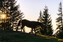Horse at sunset royalty free stock images