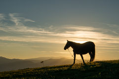 Horse at sunset royalty free stock image