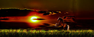 Horse and sunset Royalty Free Stock Image