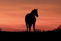 A Horse at Sunset. Silhouette of a horse standing on a hilltop with the backdrop of an orange sunset sky Royalty Free Stock Image