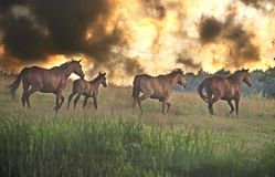 Horses running stock photos