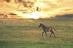 Lonely young horse stock images