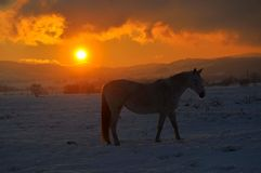 HORSE SUNSET stock images