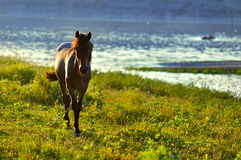 Horse in sunset. Young horse playing on sunset Royalty Free Stock Image