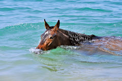 Horse swims in the sea Royalty Free Stock Photography