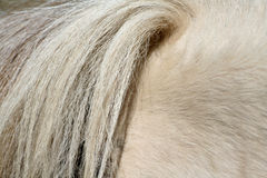 Horse tail Stock Photography