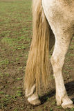 Horse tail Stock Photos