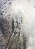 Horse tail Stock Images
