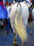 Horse tail Royalty Free Stock Photo