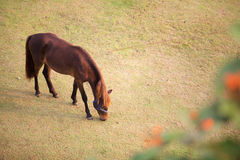 A horse take a grass on the field Stock Photo