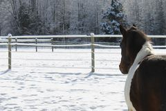 Horse taking a nap in winter pasture. Tricolor horse taking a nap on a winter day on a farm in rural Indiana royalty free stock photos