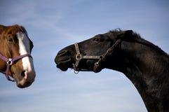 Horse Talk Stock Image