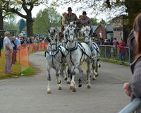 White Horses and carriage Royalty Free Stock Images