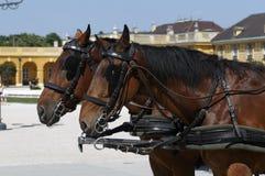 Horse team in a courtyard Stock Photos