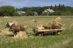 Horse Team Hay Wagon Farm Harvest Time. Harvest time on the old time farm. A team of horses wait patiently while the farmer is off gathering the hay to load onto Royalty Free Stock Image