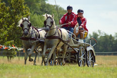 Horse Team race. Man and assistant driving a team of two horses and carriage in the annual marathon race, Stroe, Netherlands Royalty Free Stock Image