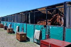 Horse In Temporary Show Stall. A horse waits in a temporary stall at a horse show royalty free stock photos