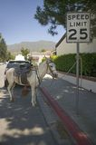 Horse tethered to a sign relaxes on a side street during Fourth of July celebration in Ojai, CA Stock Photo