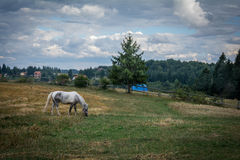 Horse on the green mountain field. Royalty Free Stock Photography