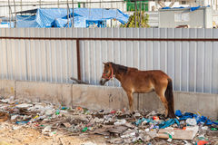 A horse in Thailand stands in the waste Stock Photos