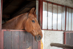 Horse in their stable Royalty Free Stock Images