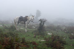 Horse tied to a buash in a misty forest Stock Images