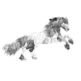 Horse to the black and white section, with women`s line in the body, Baroque Royalty Free Stock Images