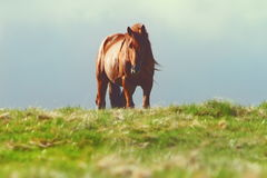 Horse on top of the hill Royalty Free Stock Image